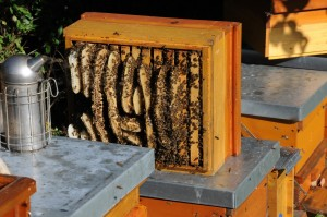 panal de miel