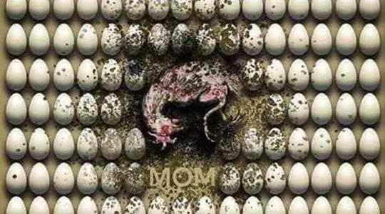La vida de miseria, explotación y muerte de las gallinas