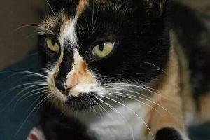lunita es mi hermana gata